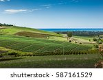 vineyards overlooking the sea...