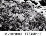 bouquet of beautiful... | Shutterstock . vector #587168444