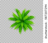 vector palm tree isolated on... | Shutterstock .eps vector #587207294