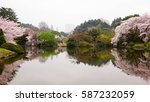 cherry blossoms and reflection... | Shutterstock . vector #587232059