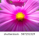 An Incredible Pink Flower With...