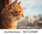 Stock photo red pet cat sitting on the windowsill looking out the window onto the street sunlight 587319089