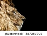 Stock photo portrait of a beautiful lion cat in profile lion in dark 587353706