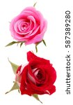 Rose Flower Head Isolated On...