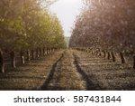 freedom  peace  energy  success ...   Shutterstock . vector #587431844