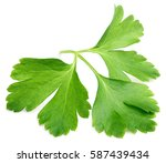 Garden Parsley Herb  Coriander...