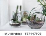 mini succulent garden in glass... | Shutterstock . vector #587447903