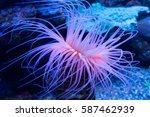 sea anemone | Shutterstock . vector #587462939