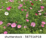 Small photo of Afternoon flower