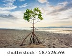 Mangrove Tree At Clean Beach O...