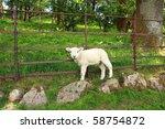 lost lamb  lake district