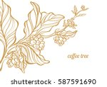 coffee branch with leaves and... | Shutterstock .eps vector #587591690