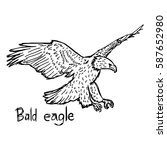 Bald Eagle   Vector...