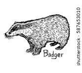 badger   vector illustration... | Shutterstock .eps vector #587653010