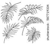 vector monochrome set of palm... | Shutterstock .eps vector #587719334