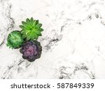 Succulent On Marble Background...