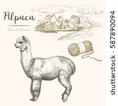 Alpaca. Set Of Vector Sketches...