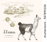 llama. set of vector sketches... | Shutterstock .eps vector #587890106