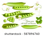 collection of green peas.... | Shutterstock .eps vector #587896760