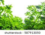 green leaf isolated on the... | Shutterstock . vector #587913050