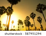 palm trees with sunset... | Shutterstock . vector #587951294