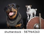 two dogs on black background ... | Shutterstock . vector #587964263