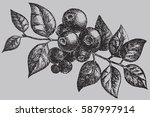 the blueberry on the branch... | Shutterstock .eps vector #587997914