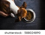 food for dogs in the plate | Shutterstock . vector #588024890