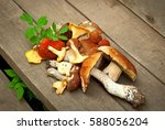 Collection Of Various Mushroom...
