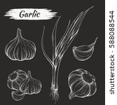 vector hand drawing of garlic... | Shutterstock .eps vector #588088544