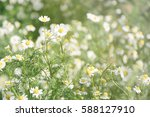fresh chamomile flower field... | Shutterstock . vector #588127910