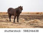 icelandic pony.   Shutterstock . vector #588246638