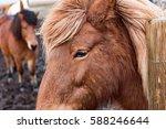 icelandic pony.   Shutterstock . vector #588246644
