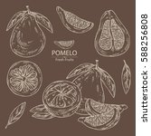 collection of pomelo and pomelo ... | Shutterstock .eps vector #588256808