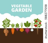 Stock vector vegetable garden banner organic and healthy food poster with root veggies flat style vector 588277058