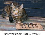 Stock photo striped cat with ancient keys 588279428