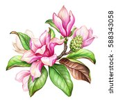 watercolor botanical... | Shutterstock . vector #588343058