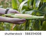 hands of farmer woman holding... | Shutterstock . vector #588354008