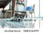 Stock photo little puppy 588526499