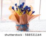 beautiful crocuses. a bouquet... | Shutterstock . vector #588531164