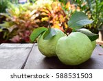 healthy guava fruits with... | Shutterstock . vector #588531503