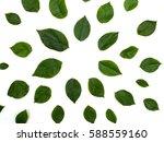 green leaves frame on white... | Shutterstock . vector #588559160