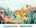 summer day in flowers garden or ...   Shutterstock . vector #588561494