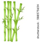 bamboo with leaf vector... | Shutterstock .eps vector #588575654