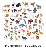Animal Full Length Portraits...