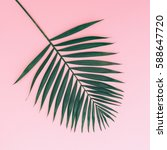 Palm Leaf On A Pink Background...