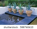 Agave Americana In Containers...
