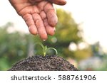 old hand watering a tree on... | Shutterstock . vector #588761906