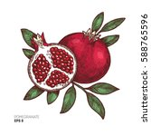 pomegranate vintage... | Shutterstock .eps vector #588765596