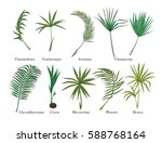 palm leaves set. colored.vector ... | Shutterstock .eps vector #588768164